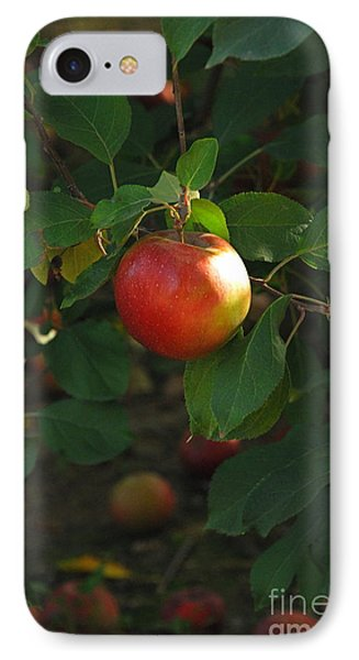 Apple On Tree IPhone Case by Kathy Gibbons