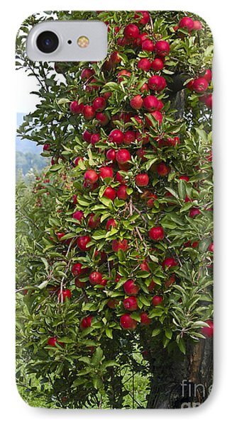 Apple Tree IPhone Case by Anthony Sacco