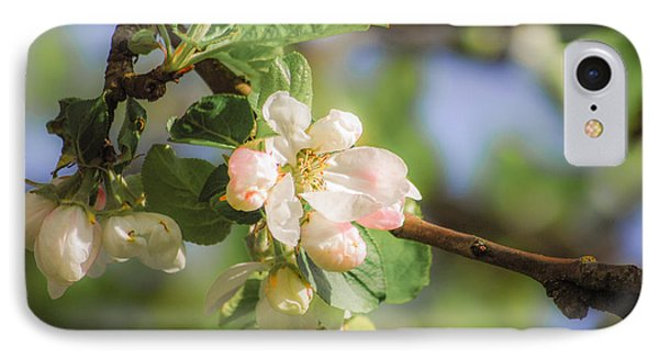 Apple Tree Blossom - Vintage Phone Case by Hannes Cmarits