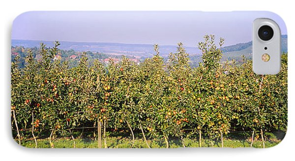 Apple Trees In An Orchard, Weinsberg IPhone Case