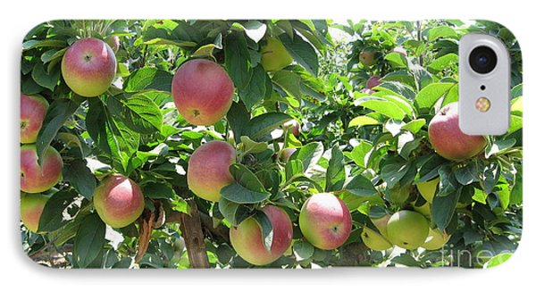 Apples At Gizdich IPhone Case