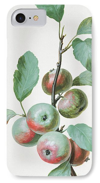 Apples IPhone Case by Pierre Joseph Redoute