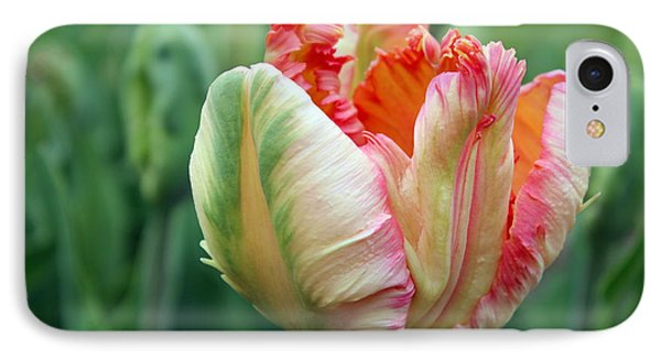 Apricot Parrot Tulip IPhone Case by Joseph Skompski