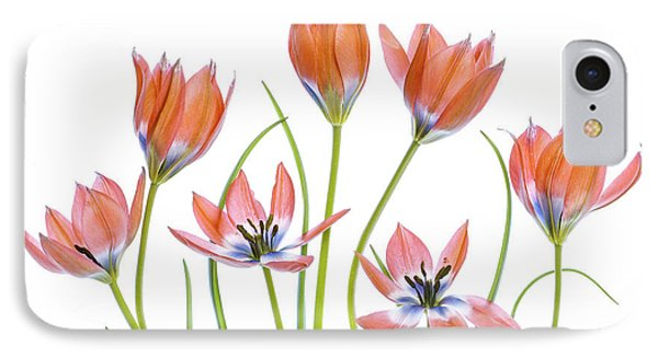 Apricot Tulips IPhone Case