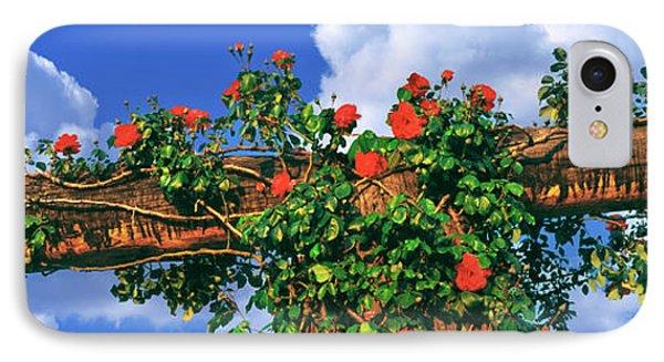Arbor And Spreading Rose, Temecula IPhone Case
