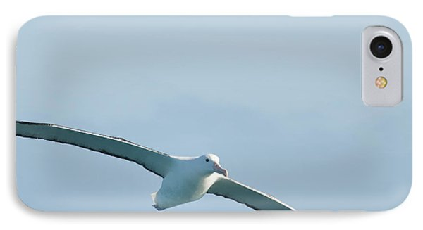Arbornos In Flight IPhone Case by Loriannah Hespe
