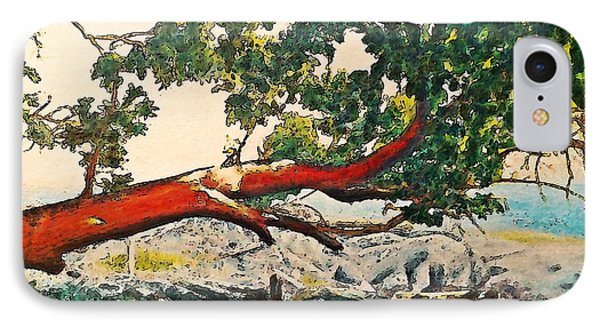 Arbutus Over Beach IPhone Case by Stanley  Funk
