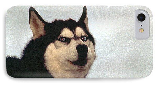 Arctic Dog IPhone Case