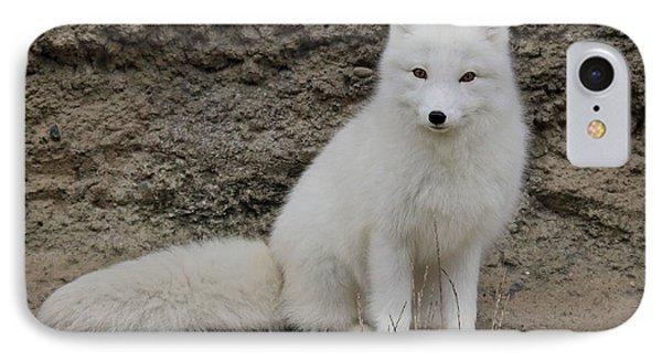 Arctic Fox IPhone Case by Athena Mckinzie
