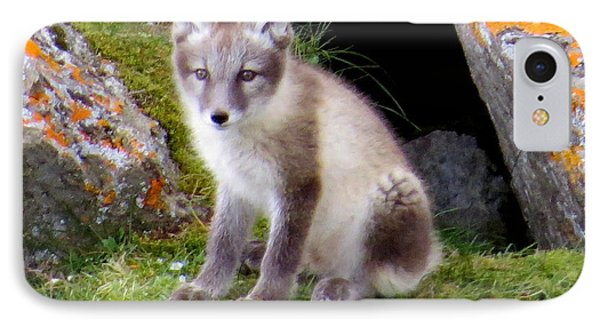 Arctic Fox Cub IPhone Case