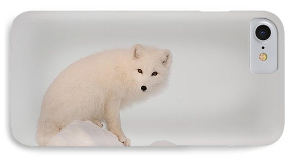 Arctic Fox Stands In Late Afternoon Sun IPhone Case by Tom Soucek