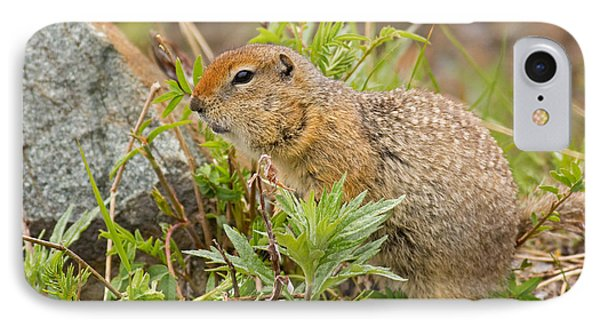 Arctic Ground Squirrel IPhone Case by Brian Magnier