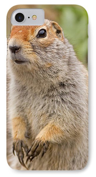 Arctic Ground Squirrel Close-up IPhone Case by Brian Magnier