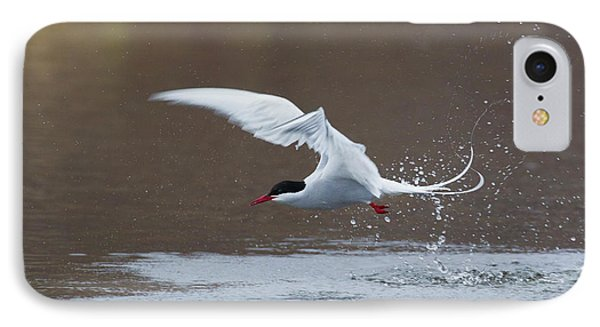 Arctic Tern Fishing IPhone Case by Ken Archer