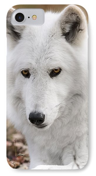 Arctic Wolf IPhone Case by Eduard Moldoveanu