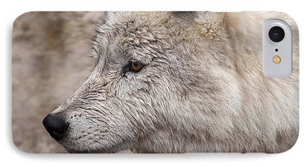 Arctic Wolf IPhone Case by Eunice Gibb