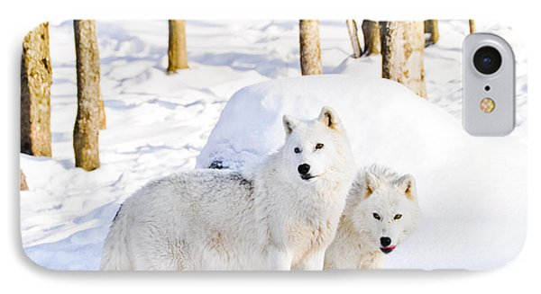 Arctic Wolves IPhone Case by Cheryl Baxter