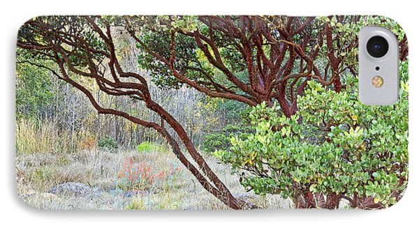 IPhone Case featuring the photograph Arctostaphylos Hybrid by Kate Brown