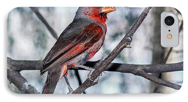 IPhone Case featuring the photograph Arizona Cardinal by Elaine Malott