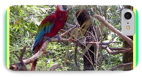 IPhone Case featuring the photograph Artistic Wild Hawaiian Parrot by Joseph Baril