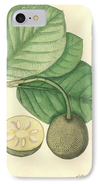 Artocarpus Chaplasha IPhone Case by Natural History Museum, London