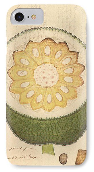 Artocarpus Heterophyllus IPhone Case by Natural History Museum, London