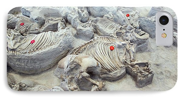 Ashfall Fossil Beds Fossils IPhone Case by Jim West