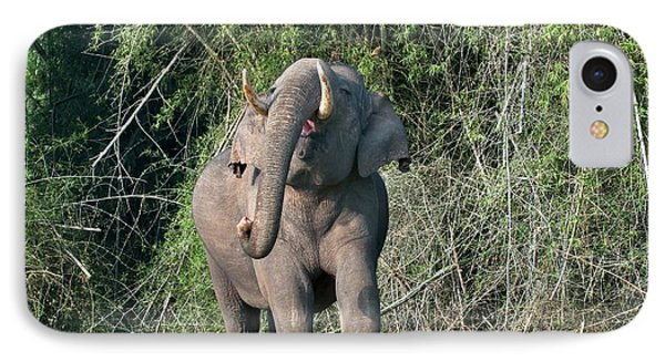 Asian Bull Elephant Displaying IPhone Case