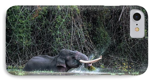 Asian Elephant Feeding In A River IPhone Case