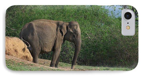 Asian Elephant Scratching Itself IPhone Case