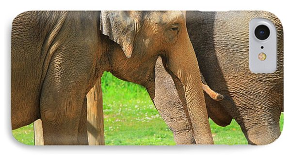 Asian Elephants IPhone Case by Dan Sproul