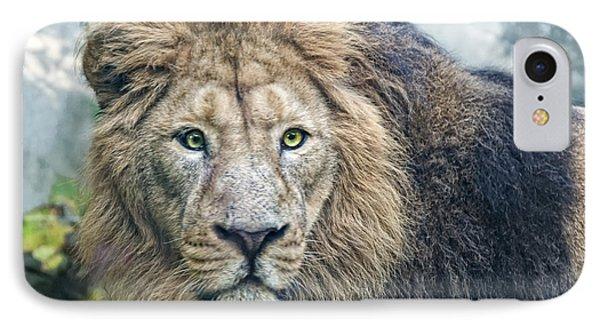 Asian Lion IPhone Case by Joachim G Pinkawa
