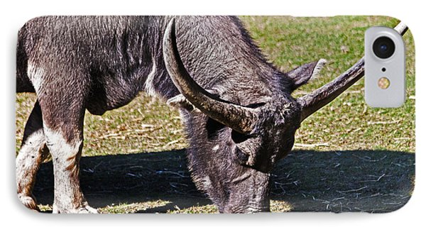 Asian Water Buffalo  IPhone Case by Miroslava Jurcik