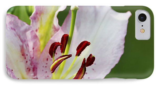 Asiatic Lily 2a IPhone Case by Sharon Talson
