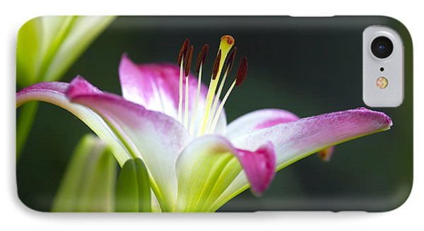 Asiatic Lily Lollipop 2 IPhone Case by Sharon Talson