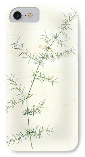 Asparagus Tricarinatus, Asparagus Verticillatus Asperge à IPhone Case