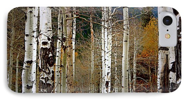 Aspen In The Rockies IPhone Case by Lynn Sprowl
