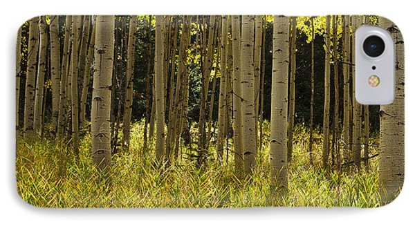 Aspen Trees All In A Row IPhone Case