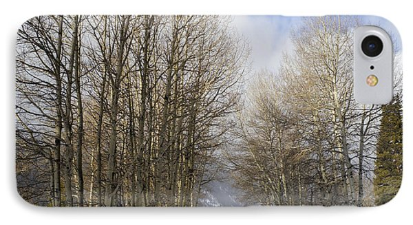 Aspen Trees Along Snowy Colorado Path IPhone Case by Loriannah Hespe
