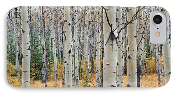 Aspen Trees In A Forest, Alberta, Canada IPhone Case