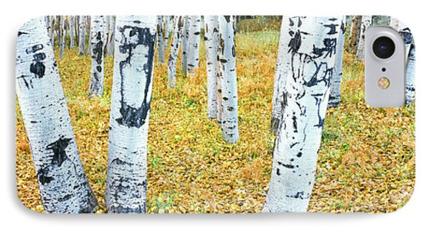 Aspen Trees In A Grove, Hart Prairie IPhone Case by Panoramic Images