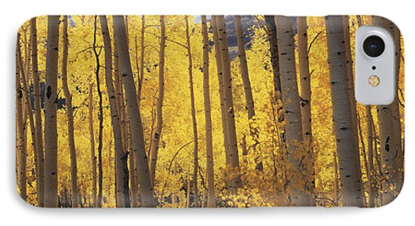 Aspen Trees In Autumn, Colorado, Usa IPhone Case by Panoramic Images