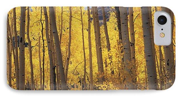 Aspen Trees In Autumn, Colorado, Usa IPhone Case
