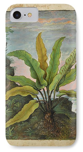 Asplenium Scolopendrium IPhone Case by British Library