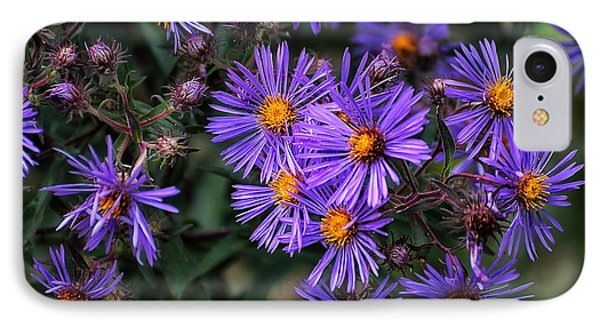 IPhone Case featuring the photograph Asters In Autumn by Beth Akerman