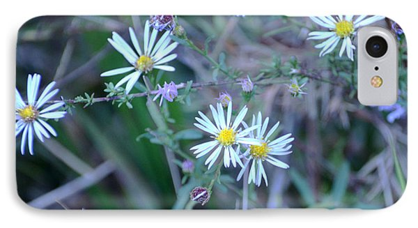 Asters IPhone Case by Linda Brown