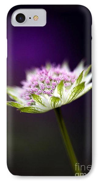 Astrantia Buckland Flower IPhone Case by Tim Gainey
