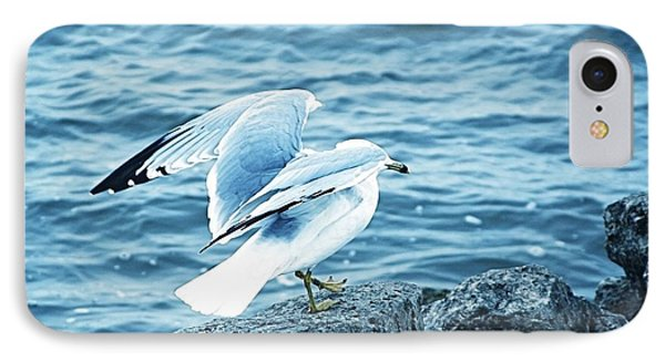 At The Waters Edge Seagull IPhone Case
