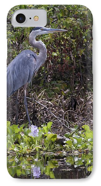 Atchafalaya Swamp Blue Heron IPhone Case