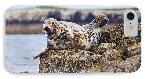 Atlantic Grey Seal Halichoerus Grypus Phone Case by Liz Leyden